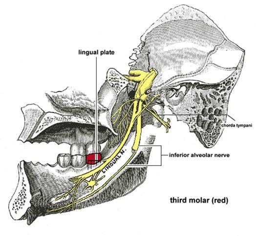 saliwell saliva gland stimulator